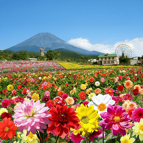 遊園地ぐりんぱの綺麗で美しい花畑